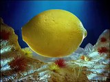 Bacardi Submarine by PES