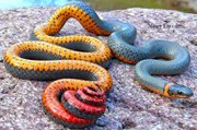 Top 10 Most Deadliest and Venomous Snakes in the World - Most Dangerous&  Poisonous Snake Ever