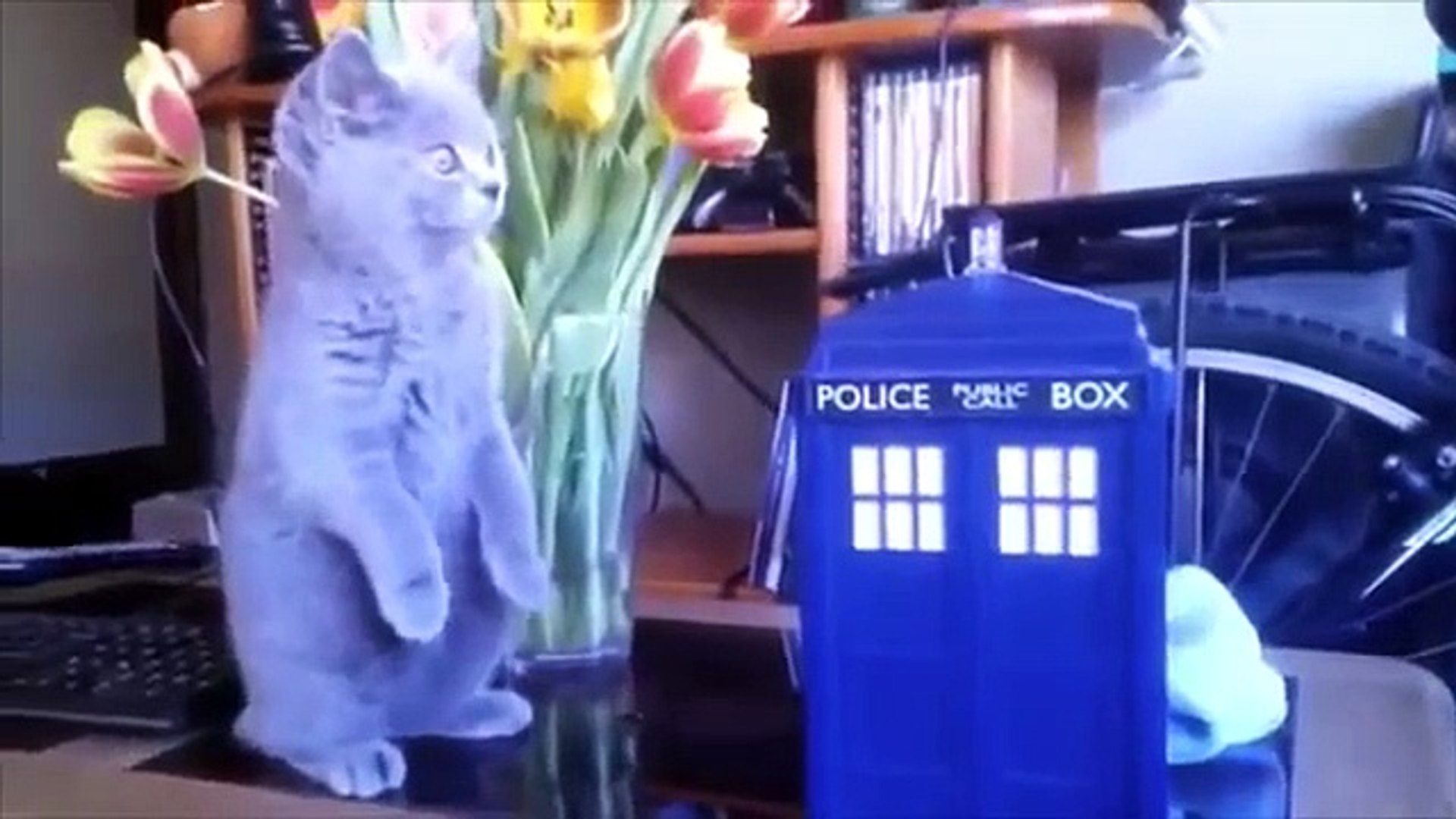 Entertainment pets. Funny and amusing pets