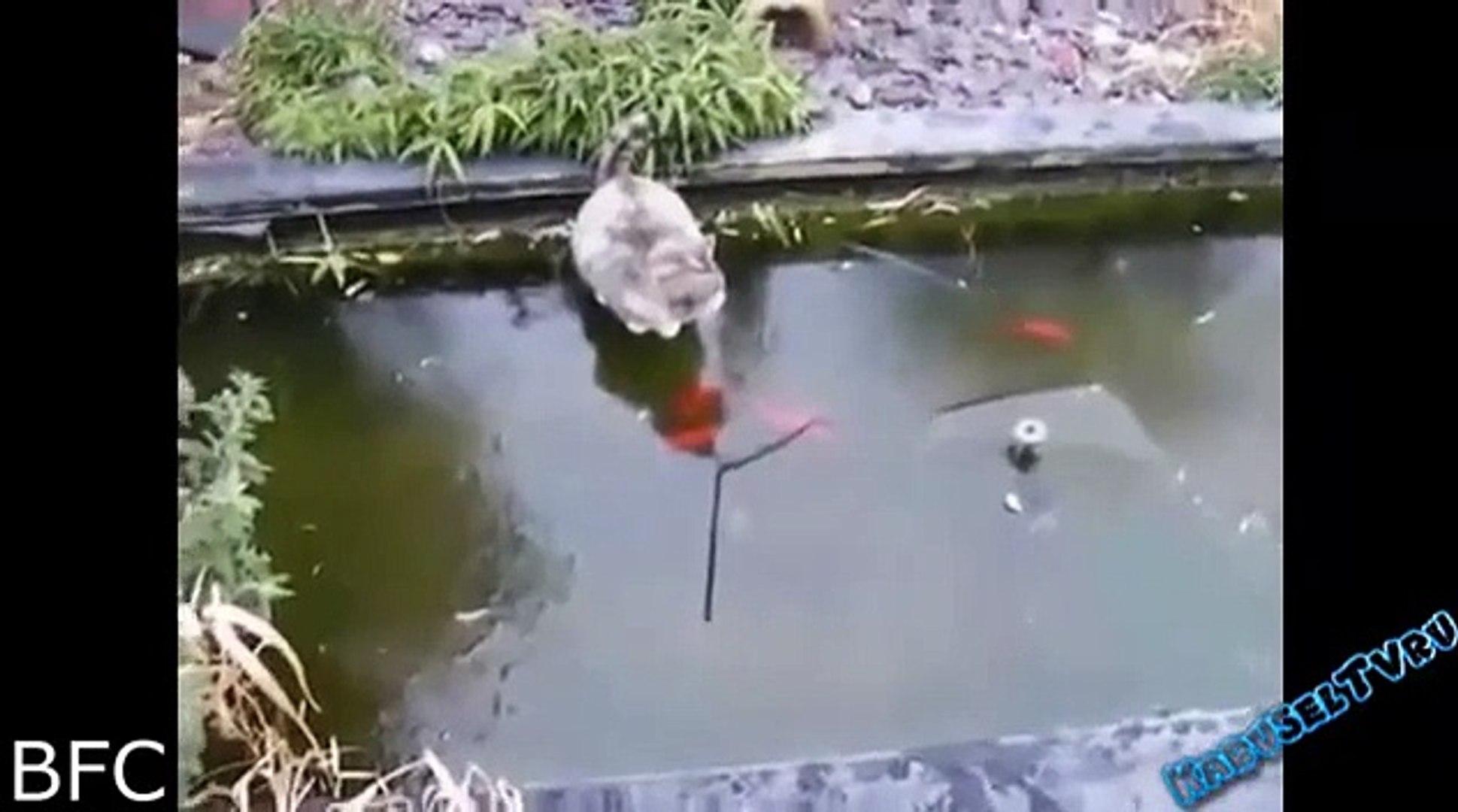 おもしろ 動物 ハプニング
