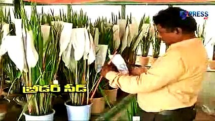 Success story of Hybrid Rice Seed Production by Prem Chand, Warangal - Express TV