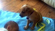 Cute puppy falls asleep with this sleeping Baby... Love this video!