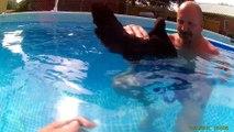 Ce gars n'en revient pas que les poules flottent dans l'eau!