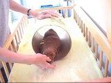 Ce chien de thérapie apprend aux personnes à mobilité réduite à faire du surf