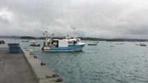 Coquilles. Ouverture en baie de Saint-Brieuc