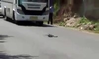 Funny Fight Video _ Snake VS Squirrel Fight _ Funny Video