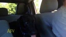 Son maître lui demande s'il a envie d'aller au parc, mais ce qu'il fait est hallucinant !