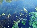 nage leurre souple weightless 16cm