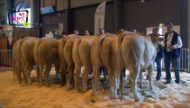[VIDEO #TE2015] Concours blonde d'Aquitaine