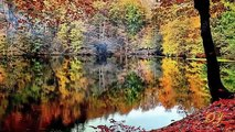 Tudor Gheorghe Niciodata Toamna ( Autumn Theme )