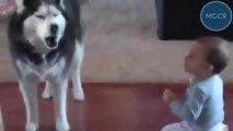 conversazione   canina