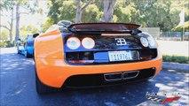 7 Bugatti Veyrons!! Including Super Sport, Vitesse, Grand Sport, Pur Blanc, etc