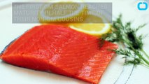 First Genetically Modified Salmon To Be Farmed