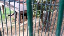 Popular Videos - Black panther & Big cat Animals World