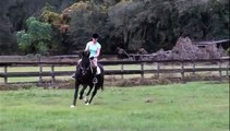 Dressage Horses For Sale At Five Phases Farm Ocala Florida
