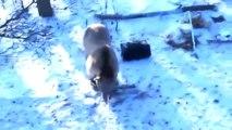 The bear attacked the hunters. Watch to the end! Медведь напал на людей! Жесть! Смотреть до конца!