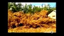 Snake Attacks Crocodile FULL Documentary Animal Planet 2015 National Geographic Animals