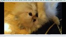 Tiere in der Identitätskrise Teil 2: Hunde denken, sie seien Katzen