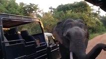 Costumbres elefante. Elefante divertido inspecciona vehículos