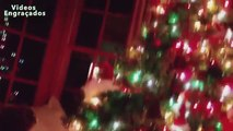 Árboles divertido gatos de la Navidad. gatos divertidos