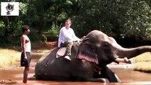 Les éléphants, les humains et les éléphants. Les éléphants et les éléphants drôles