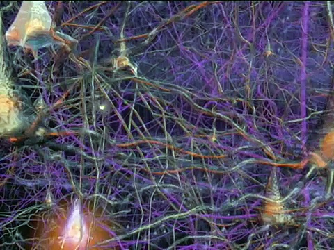 The Brain: Our Universe Within