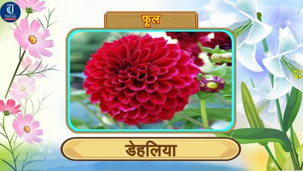 Learn Names of Flowers in Hindi | Animation Video for Kids