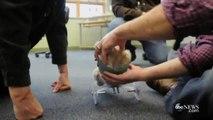 Ce chiot handicapé peut remarcher grâce à une imprimante 3D !