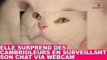 Elle surprend des cambrioleurs en surveillant son chat via webcam ! À suivre dans la minute chat #46