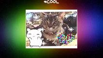 cat  kitty  loop  nice  cool  sparkle  cute  adorable  heart  love hehe my kitty Lulu