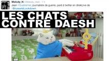 Les chats contre Daesh : Quand les lolcats se mobilisent contre les terroristes à Bruxelles