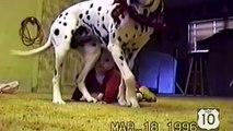 Cães e crianças em casa. Cães engraçados jogar, assistir e entreter as crianças