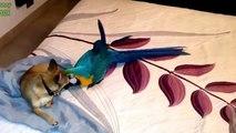 Chiens et perroquets. Une collection drôle de chiens avec des perroquets