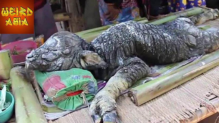 CROCODILE-BUFFALO HYBRID Born in Thailand | Weird Asia