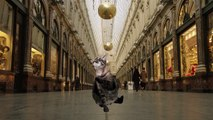 Buzz : Les chats envahissent Bruxelles: la vidéo surréaliste des services de tourisme bruxellois ( #BrusselsLockdown ) !