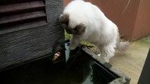 Le très beau geste d'un chat envers un poisson ...
