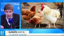 Grippe aviaire : quels sont les risques ?
