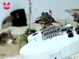 70 piccoli volatili fanno piccoli assoli di chitarra in nome dell'arte