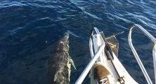 Rencontre avec des dauphins, un phoque puis une baleine