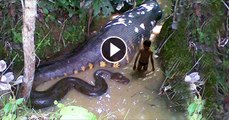 Man Saves Boy From Giant Snake Attack