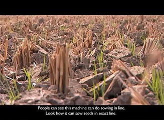 Planting without ploughing zero till wheat in India