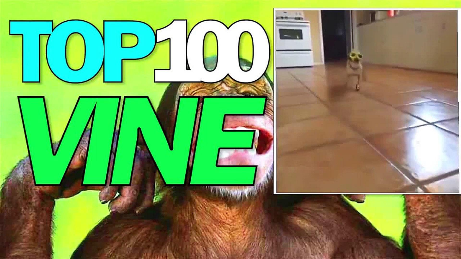 TOP 100 VINE ANIMAL 2014 l FUNNY ANIMALS l CATS l DOGS l ТОП 100 С ЖИВОТНЫМИ