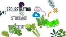 La gestion durable des forêts, vecteur de lutte contre les changements climatiques