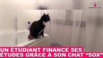 Un étudiant finance ses études grâce à son chat Sox ! À suivre tout de suite dans la minute chat #51
