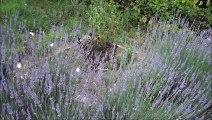 Dans les recoins de mon jardin - Rose BONTEMPS (2M2P)