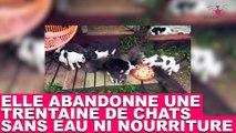 Elle abandonne une trentaine de chats sans eau ni nourriture ! À découvrir dans la minute chat #47