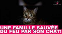 Une famille sauvée du feu par son chat ! À découvrir maintenant dans la minute chat #50