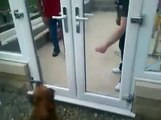 Con de chien !!!