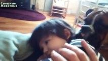 Os filhotes de cachorro que joga com bebês. Filhotes de cachorro engraçados e crianças