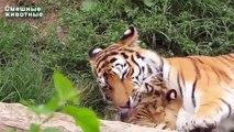 Cubs animais que vivem no jardim zoológico. Animais engraçados